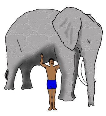 Deceased elephant being held up by a man