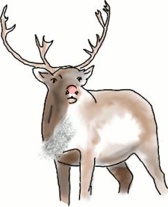 Rudolph, a bit grown up
